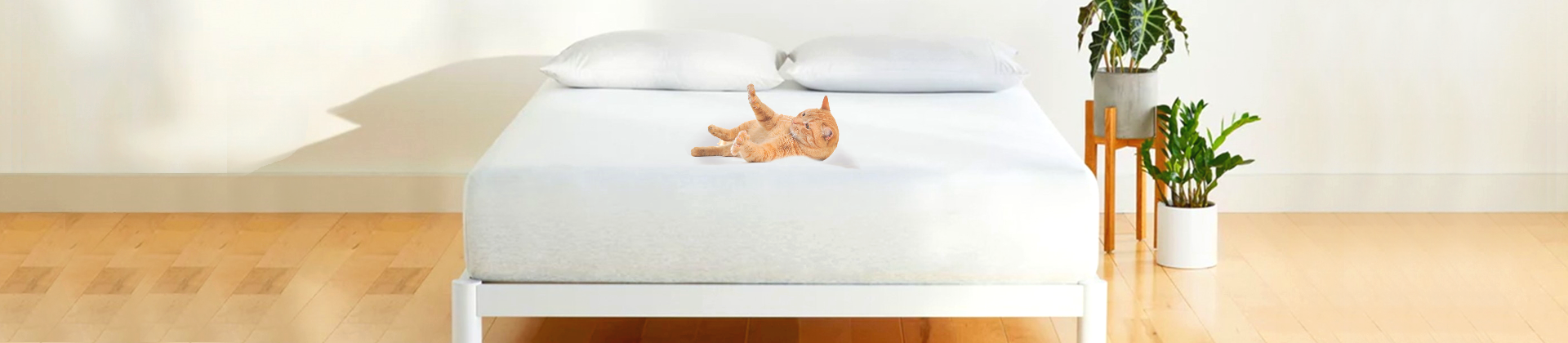 Best Cat-Proof Air Mattresses Reviewed in Detail
