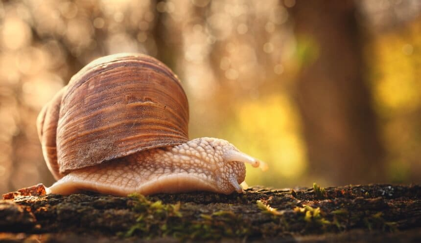 How Long Do Snails Sleep: Amazing Facts