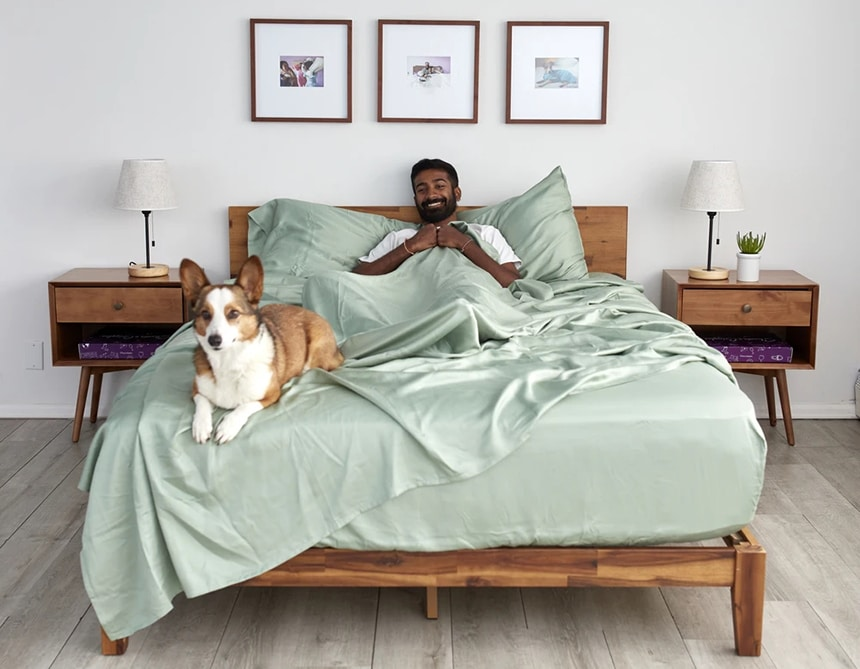 Top 5 Sheets for Dog Hair – Your Furry Friend Deserves Their Place By Your Side!