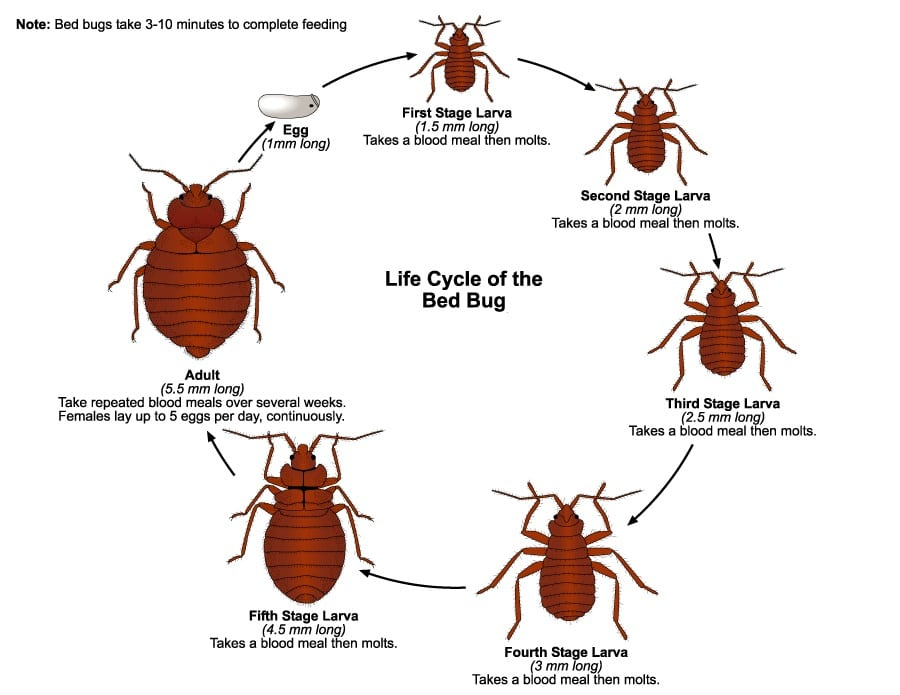 Can Bed Bugs Live on Air Mattress? The Answer Is Not That Obvious!