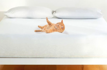 5 Best Cat-Proof Air Mattresses — Don't Worry About Your Furniture Anymore